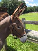 Donkey Halter